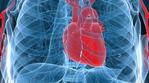 تصویربرداری-اشعه-ایکس-سه-بعدی،-پنجره-ای-رو-به-قلب-سالم