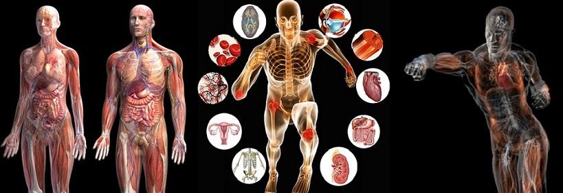 قوانین مهندسی در فیزیولوژی بدن-رشته مهندسی پزشکی-مدرسه مهندسی پزشکی-مقاله مهندسی پزشکی-آشنایی با رشته مهندسی پزشکی-iranianbme.com-biomedical engineering