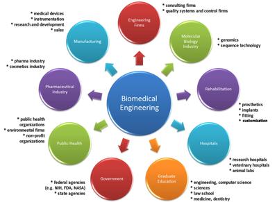 Biomedical Engineering Employment Diagram final-آشنایی با رشته مهندسی پزشکی-مدرسه مهندسی پزشکی-iranianbme.com